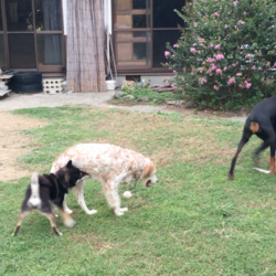 「祝☆フィラリアの犬に里親決定!」サムネイル2