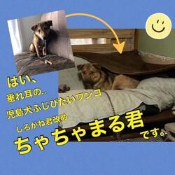「倉敷っ子○○君の幸せ便り」サムネイル3