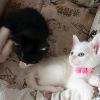 可愛い2匹兄妹です!2匹一緒を希望!