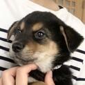 MIXの子犬の男の子ルイボスくん