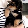 MIXの子犬の男の子ルイボスくん サムネイル6