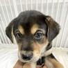 MIXの子犬の女の子ハーブちゃん サムネイル5