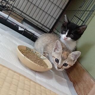 雄雌仔猫ちゃん二匹
