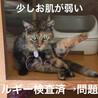 限られた人オンリー!絆を感じる猫♡ サムネイル6