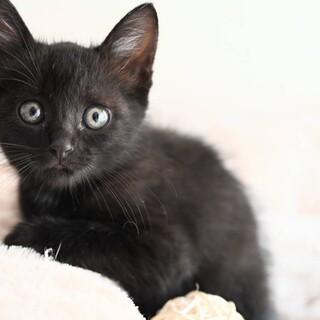 こあ♡しっぽ短め黒猫女子