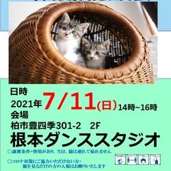 7/11(日)猫カフェ風保護猫譲渡会