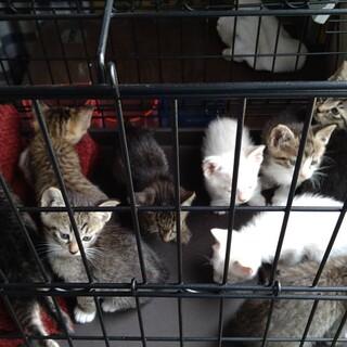 可愛い〰9匹の子猫たち