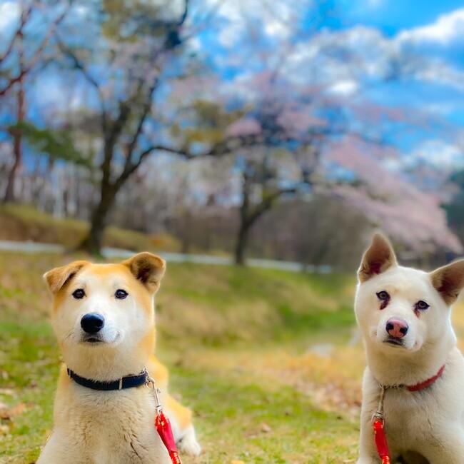 藤和那須リゾート株式会社のカバー写真