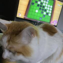 「邪魔をする猫」サムネイル2