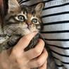 里親決定。フワフワのキジ猫テル君2ヶ月 サムネイル2