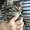 里親決定。フワフワのキジ猫テル君2ヶ月 サムネイル4