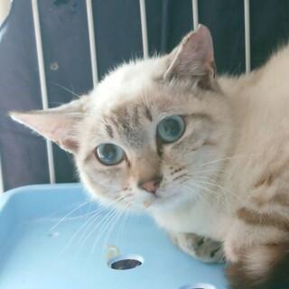 【一時停止】穏やかで小柄な美人猫さん