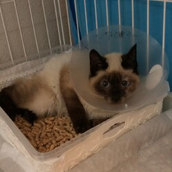 「保護猫の治療にご支援・拡散をお願いします。」サムネイル1