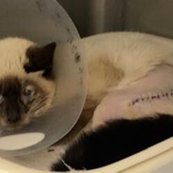 「保護猫の治療にご支援・拡散をお願いします。」サムネイル2