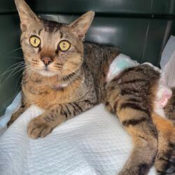 下半身麻痺のルフィーを動物病院に連れてった!