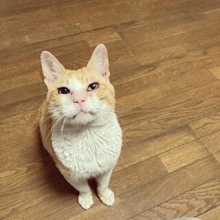 活発なおじいちゃん猫?〈てへへ〉くん