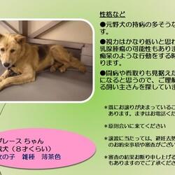 倉敷市保健所の野犬レディース