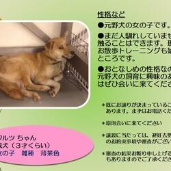 「倉敷市保健所の野犬レディース」サムネイル2