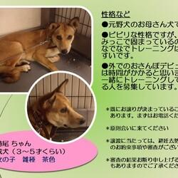 「倉敷市保健所の野犬レディース」サムネイル3