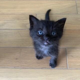子猫のちょき