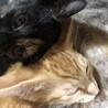 生後3か月の子猫保護