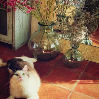 ヅラ猫おとーさん