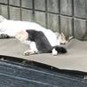 2.3か月位の迷子猫