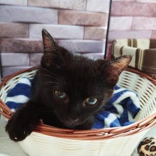 お母さん似の美猫な黒猫の女の子♪