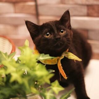 美黒猫♪マイペースでおっとりした女の子♪