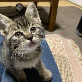大分県内募集 6-8週の子猫です。