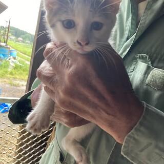 生後1ヶ月白黒猫