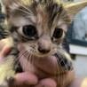 5月20日生まれ 子猫3匹の里親募集