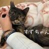 【6/20譲渡会】多頭崩壊レスキュー・すずちゃん サムネイル4