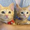 アメリカンショート柄の兄妹チャムとチュチュ2ヶ月半