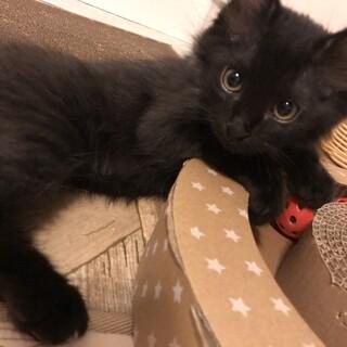 美猫4兄妹♡黒猫のツバキくん