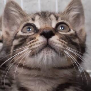可愛い甘えん坊の仔猫3か月です