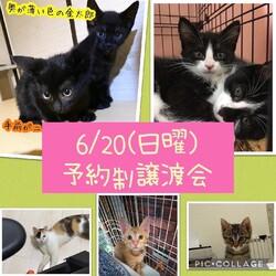 ねこ組 福岡 譲渡会