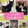 【6/20譲渡会】可愛い茶トラくん サムネイル4