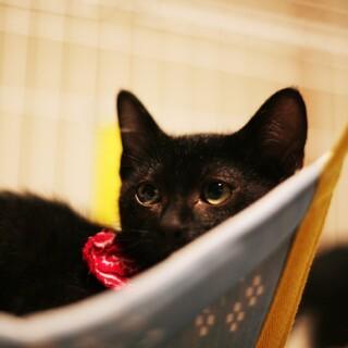 好奇心旺盛なイケメン黒猫な男の子♪