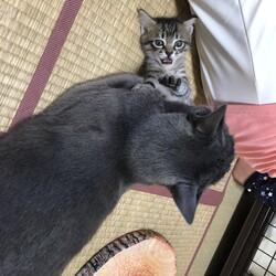 「猫社会」サムネイル2