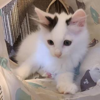 好奇心いっぱいの可愛い子猫「アンちゃん」