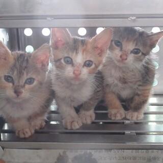 センター収容の崖っぷちの5匹の子猫達