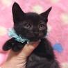 おだやか♪黒猫★リクくん 1ヵ月半すぎ