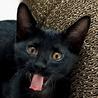 6/20所沢譲渡会参加の性格のいい黒猫ダヌ♫