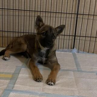 推定4ヶ月・雑種犬の女の子アミさん