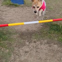 「保護犬の才能」サムネイル1