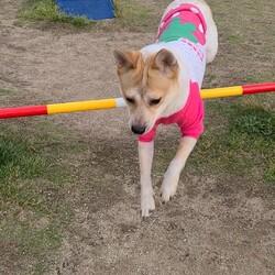 「保護犬の才能」サムネイル2