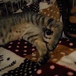 「骨折していた猫を保護」サムネイル3