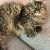 ラパーマ 世界に300匹しかいない猫ちゃん サムネイル5