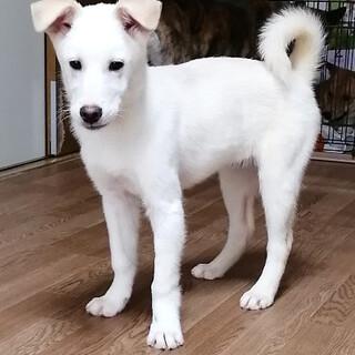 mix♂子犬「シャあくん」
